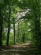 Allée forestière incitant à la promenade