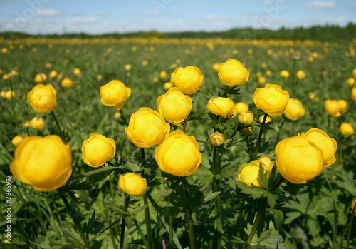 flowerses on meadow