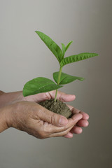 holding growing plant - environment theme