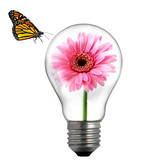 flower in the light bulb