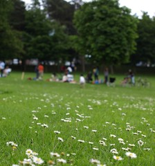 park community