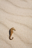 Seahorse on the beach poster