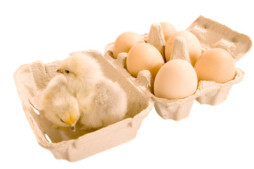 Two Chicks and Six Eggs in Box