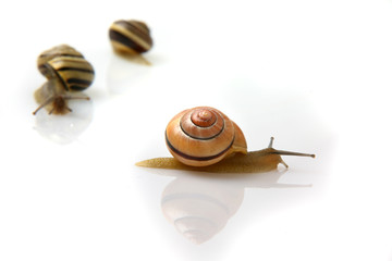 Snails isolated on the white background