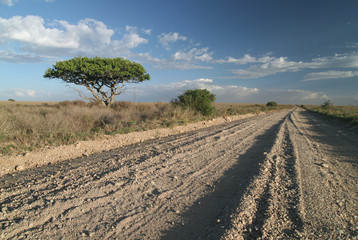 A lonely road track in savanna.