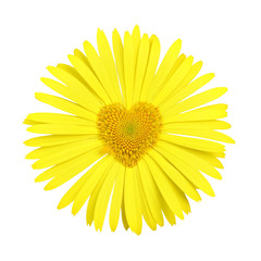 Yellow daisy with heart in center