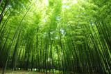 Fototapety lush bamboo forest