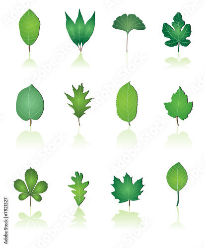 tree leaf icon