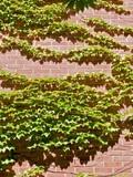 Atlanta Botanical Garden in Springtime poster