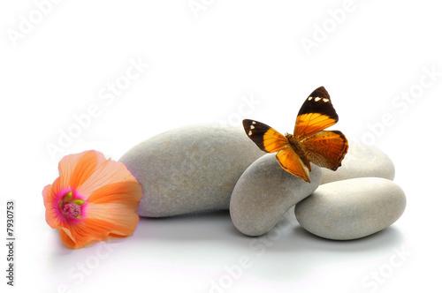 Foto op Aluminium Vlinder Papillon