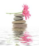 Fototapety zen / spa stones with flowers