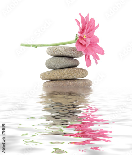 zen / spa stones with flowers