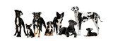 Fototapety group of dogs