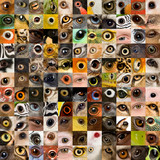patchwork of 121 animal and human eyes poster