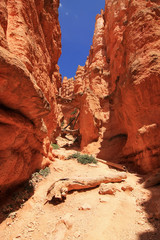 Red rocks in Bryce Canyon