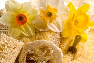 Daffodils spa