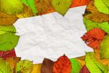 cornice di foglie poster