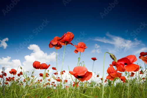 Leinwanddruck Bild Field with poppies under dark sky