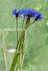 Cornflowers in a vase 2