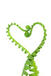 fern in love shape
