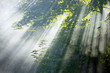 Beautiful sunbeams in forest