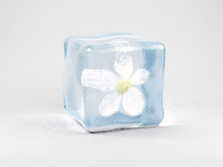 Flower in ice cube