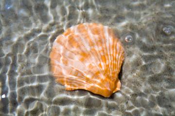 Seashell under water