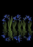 Bluebell Reflections poster
