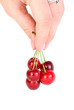 Hand carrying few red cherries