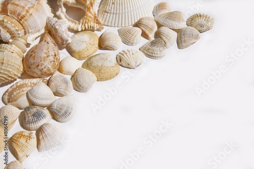 Seashells on white with ots of copy space - 8064799