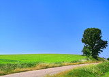 picturesque country road and lone tree poster