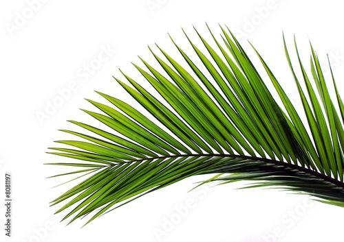 Staande foto Palm boom blatt