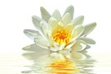 Lotus flower floating in water-
