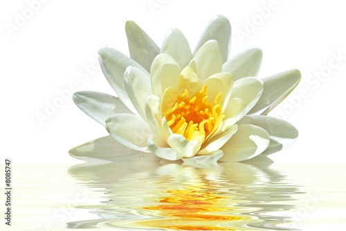 Lotus flower floating in water