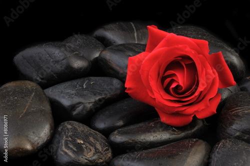 Leinwandbild Motiv rose und steine