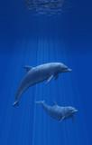 Dolphins Undersea - 3d render