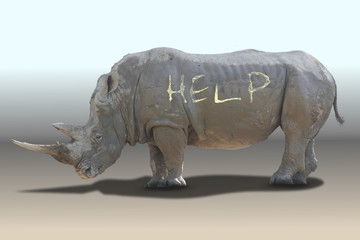 Rhinoceros need help