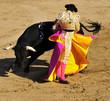 Matador & Bull - 8103757