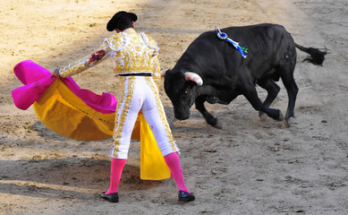 Matador with Cape Facing Bull