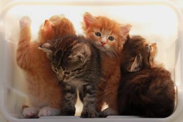 Kittens in a light box