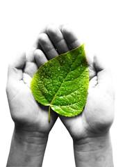 green leaf at female hands