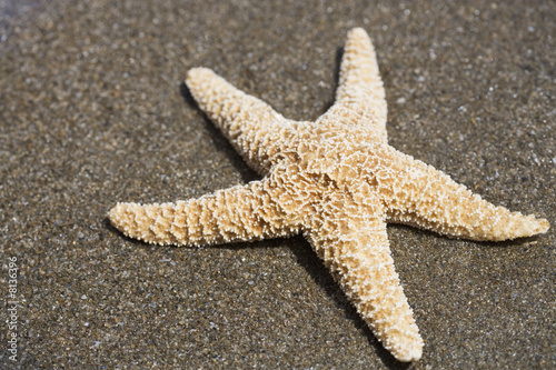 A starfish on a sandy beach