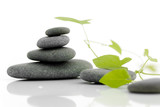 Fototapety Zen serie - pebble on a white background with green plant