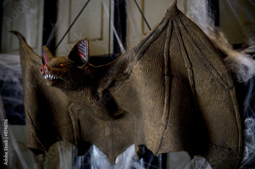 Hallowe'en decorations - toy vampire bat