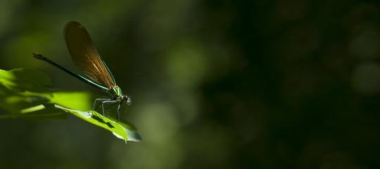 Libellule dans la nature