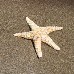 A starfish lying on a sandy beach