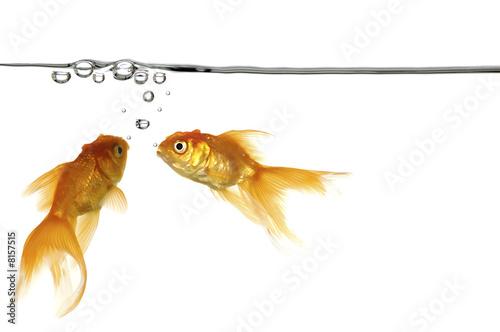 Ryby wodne i złote