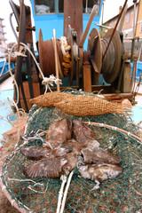 Seppie su di un peschereccio a Grado - Friuli