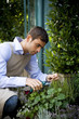 Male florist or gardener pruning shrubs