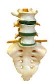 model spine poster